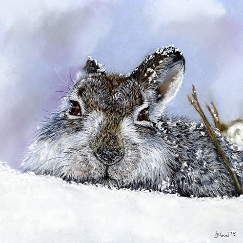Mountain Hare Limited Edition Print