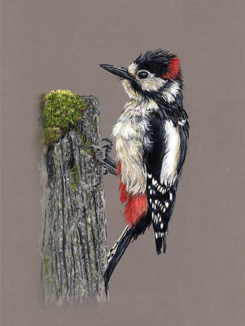Great Spotted Woodpecker Limited Edition Print
