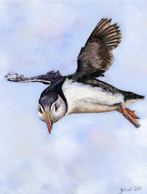 Flying Puffin 2020