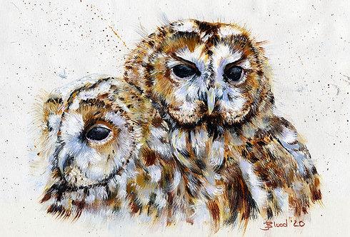 Owls 2020