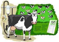 Cow & Dairy