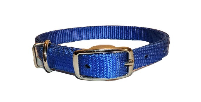 blue 3/4 inch nylon dog collar with Dee ring