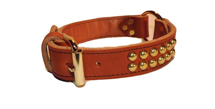 Brown leather dog collar with brass buckle and center ring. Collar has two rows of brass spots making the collar very stylish