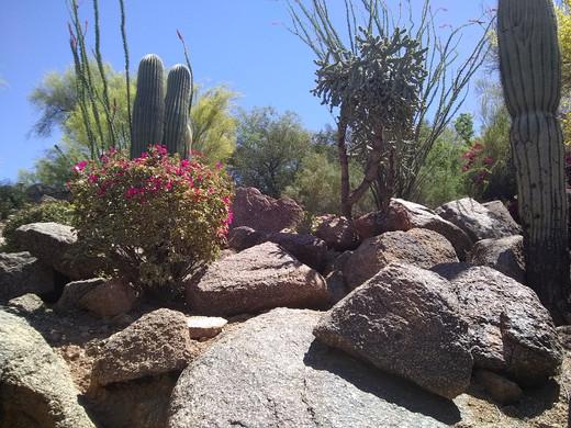 Sun Valley Landscape Maintenance Scottsdale Paradise Valley Phoenix