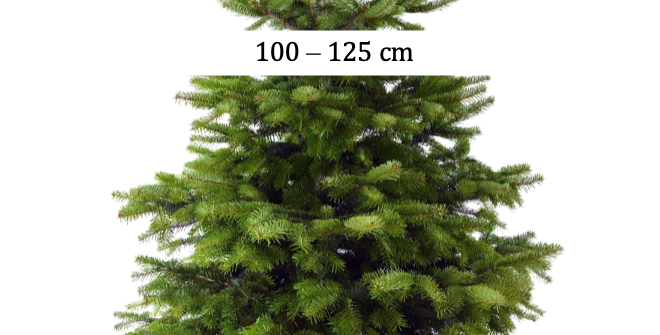 Sapin Nordmann 100-125cm