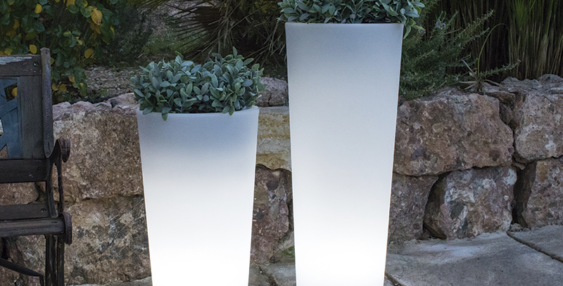 Ficus Conical illuminated planters in 2 sizes
