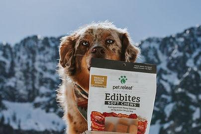 Pet releaf Edibites Soft Chews | WildLifeRx - Shop Pet CBD Here