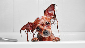 Washing Your Pup