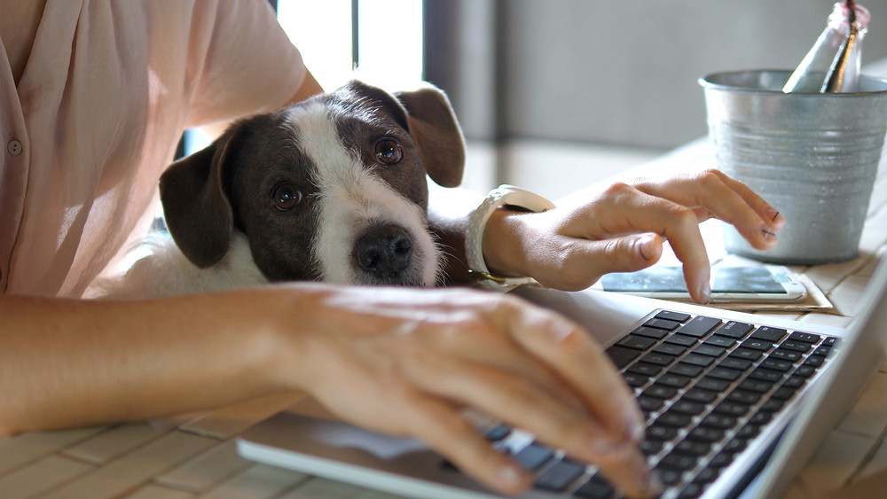 Dog on woman's lap while working on computer - WildLifeRx