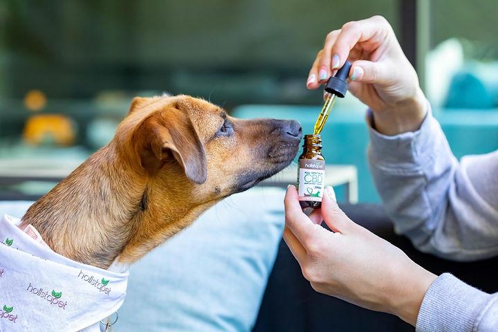 Holistapet CBD Oil | WildLifeRx - Shop CBD for Pets