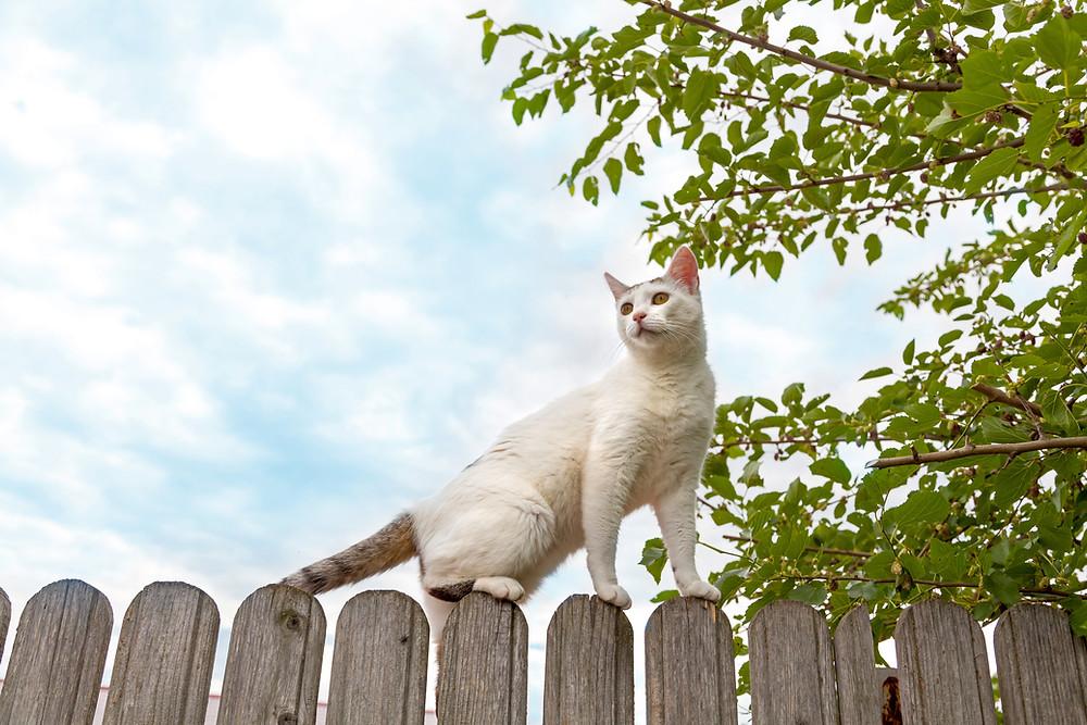White cat on fence - Shop Pet CBD at WildLifeRx