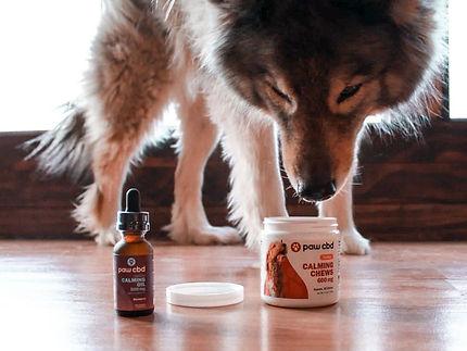 Paw CBD | WildLifeRx - Shop CBD for pets