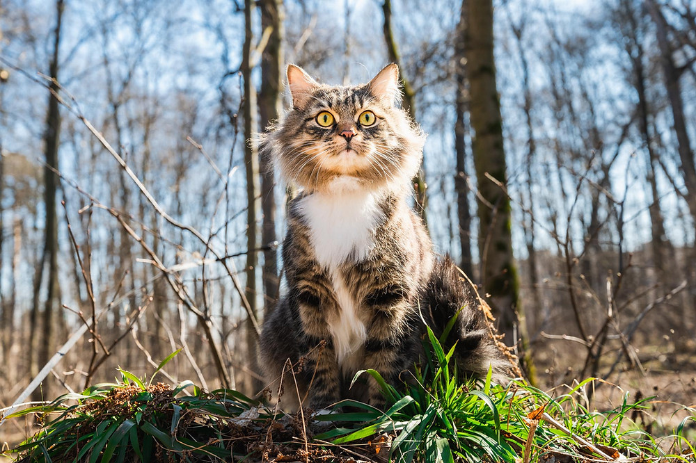 Кот на природе на поводке