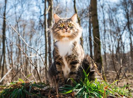Как обезопасить кошку от блох и клещей