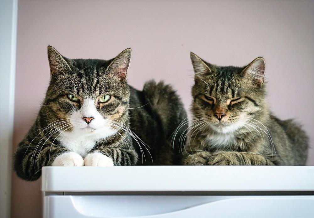 Две кошки лежат на холодильнике