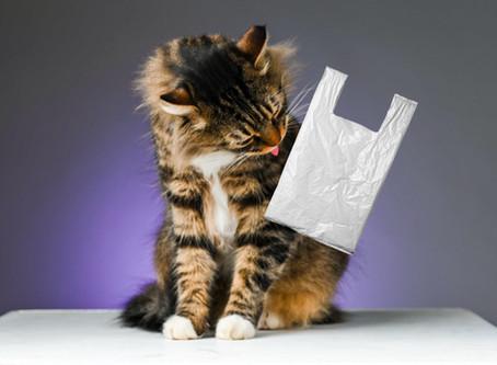 Пикацизм: почему кошка ест несъедобные предметы?