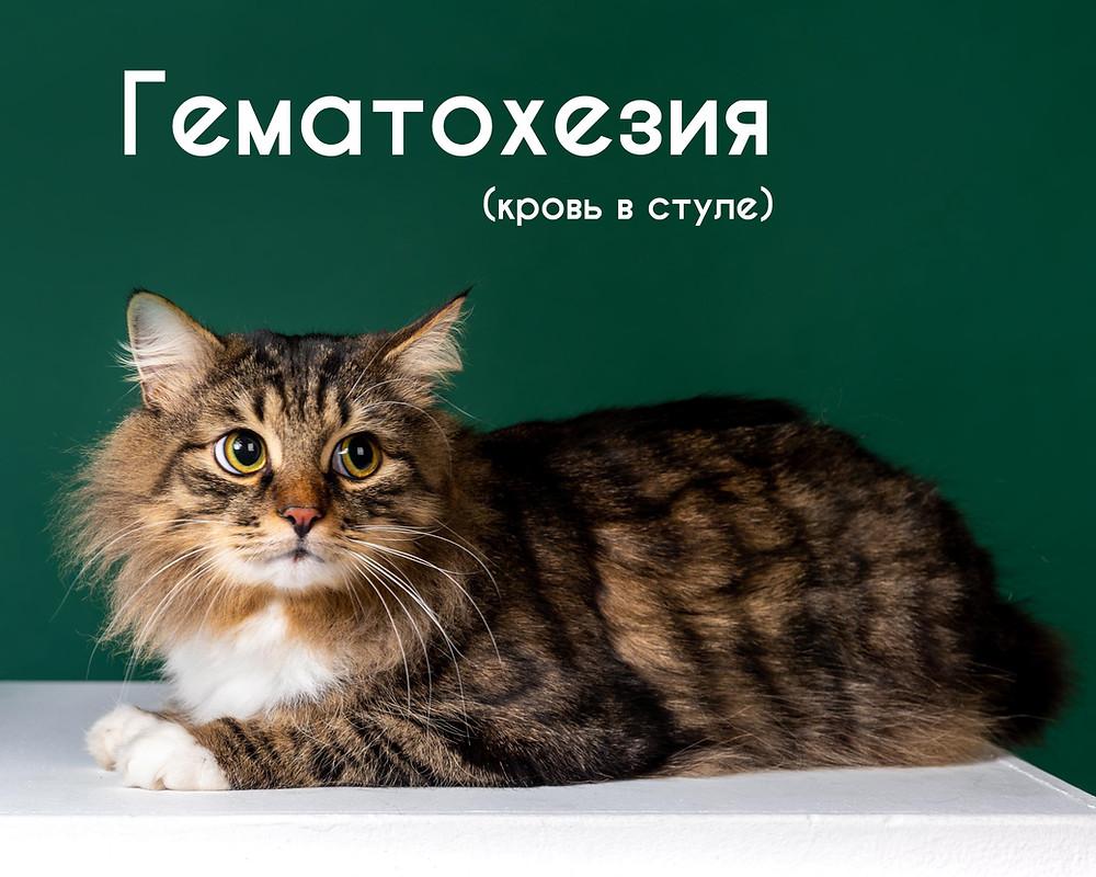 пушистый кот на зеленом фоне