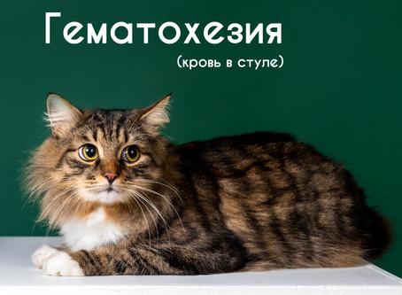 Гематохезия или кровь в кале у кошки