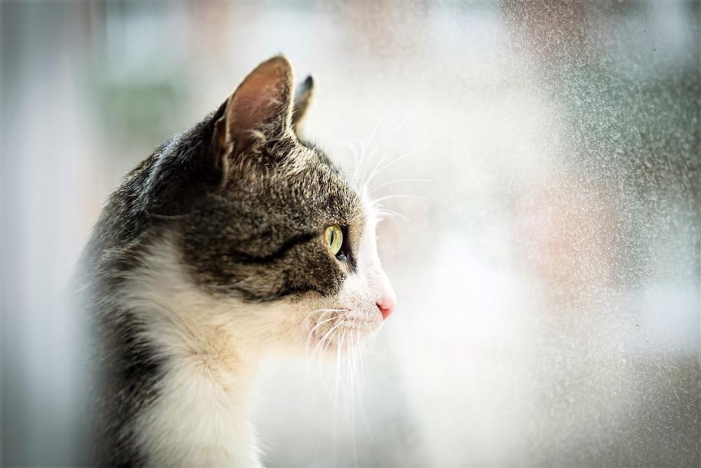 Кот смотрит в окно и ждет своего человека