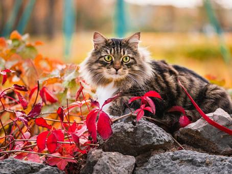 Кормление домашних кошек всего один раз в день может улучшить их здоровье