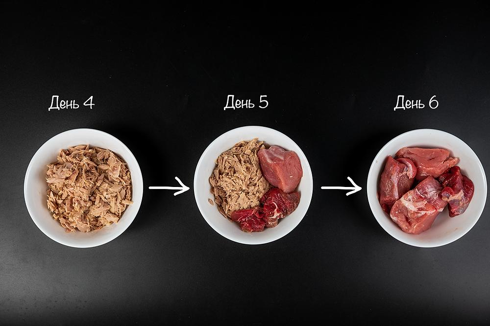 Переход с влажного корма на мясо