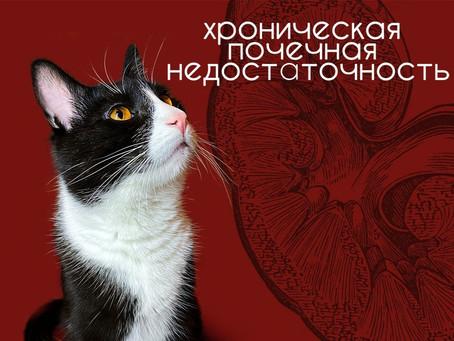 Рацион кошек при ХПН