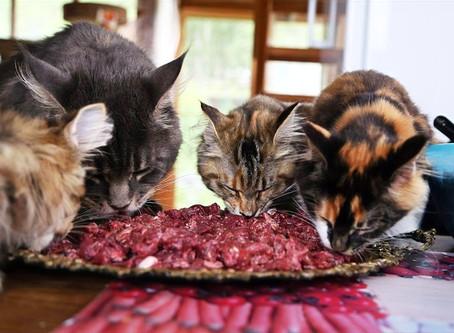 Теория и практика кормления домашних животных