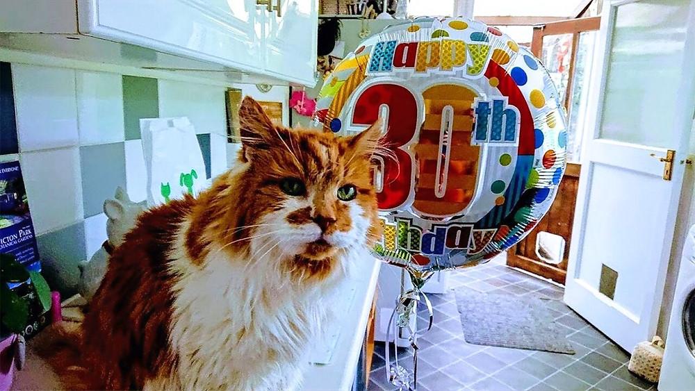 Кот долгожитель 30 лет
