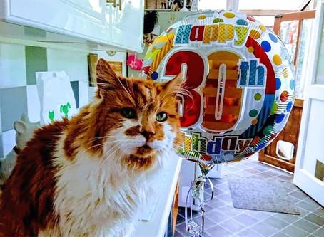 Кошки и коты - долгожители