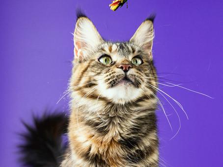 Можно ли кошкам есть насекомых?