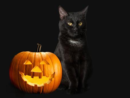 Черные кошки: история мифов и предубеждений