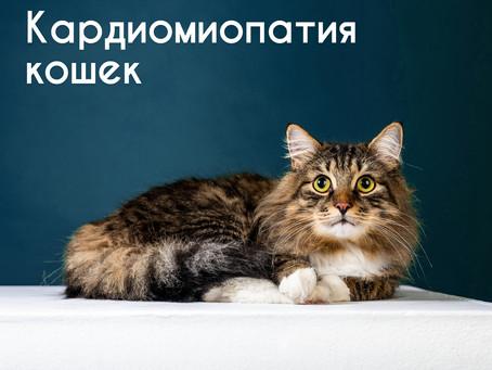 Крахмал в рационе приводит к болезни сердца у кошек