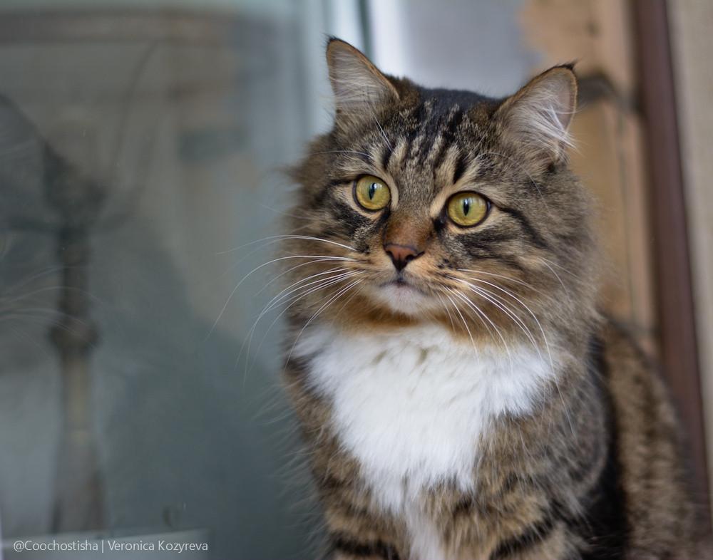 Питательные вещества для кошек