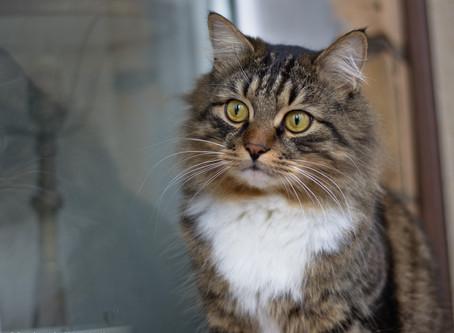 Основные потребности кошек в питательных веществах
