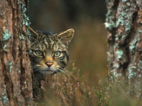 Питание диких малых кошек