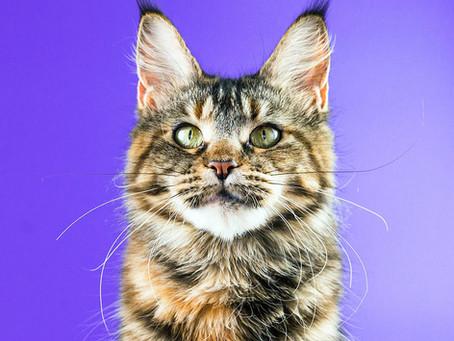 Рыба в рационе кошек