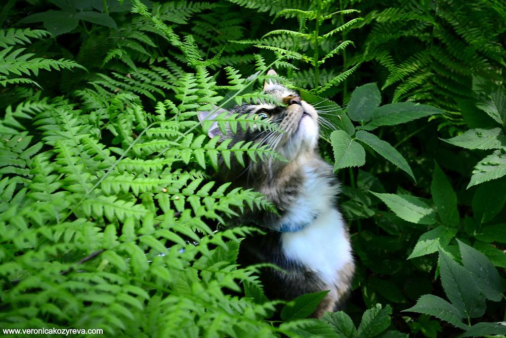 Кот в травяных зарослях усадьбы Архангельское