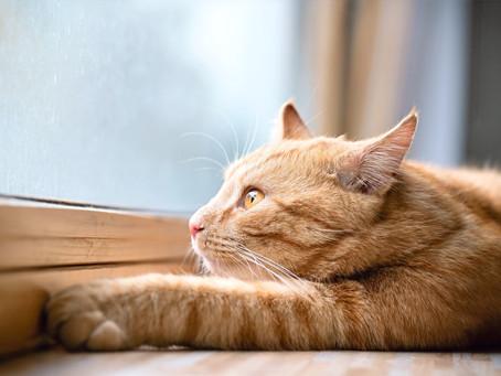 Как натуральный рацион влияет на состояние мочи вашей кошки