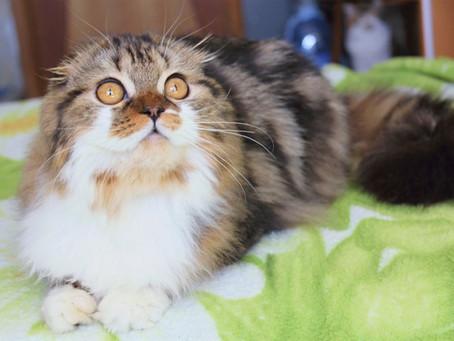 Проблема запоров у кошек и корректировка рациона