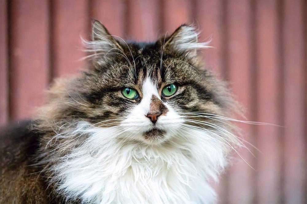 Портрет зеленоглазой уличной кошки