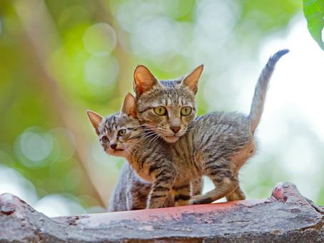Почему кошки иногда съедают своих котят?