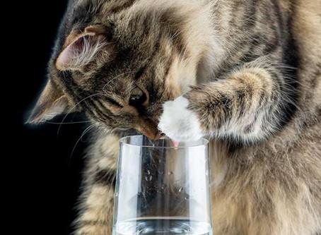 Почему моя кошка мало пьет?