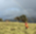 Simien Rainbow.png