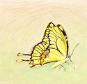 Drawn Butterfly with Green Cropped resiz