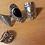 Thumbnail: BOHO VINTAGE CARVED KNUCKLE RING SETZ-4 PIECE