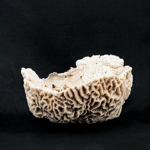White coral bowl #13