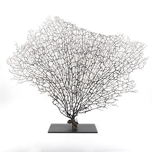 Dry coral branch - large (Natural)