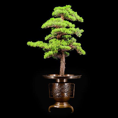 Meiji bronze utsubata ikebana, #5