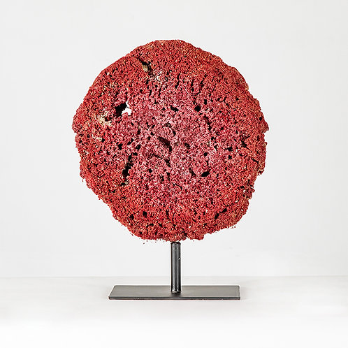 Red coral w/ stand