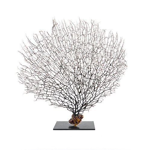 Dry coral branch - medium (Natural)
